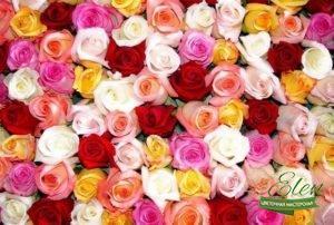 Разноцветные розы с доставкой, Цвет Роз