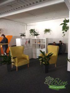 Озеленение помещения