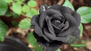 халфети черная роза